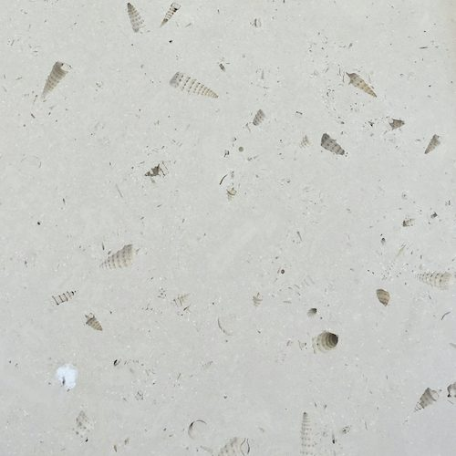 French Limestone St Pierre Aigle Coquille